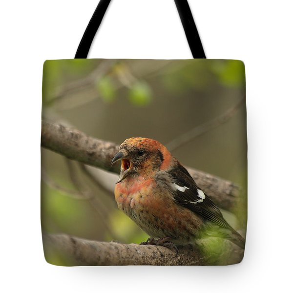 White-winged Crossbill Tote Bag by James Peterson