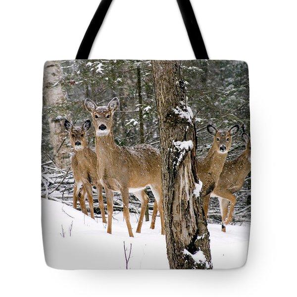 Whitetail Deer Odocoileus Virginianus Tote Bag by Gregory K Scott
