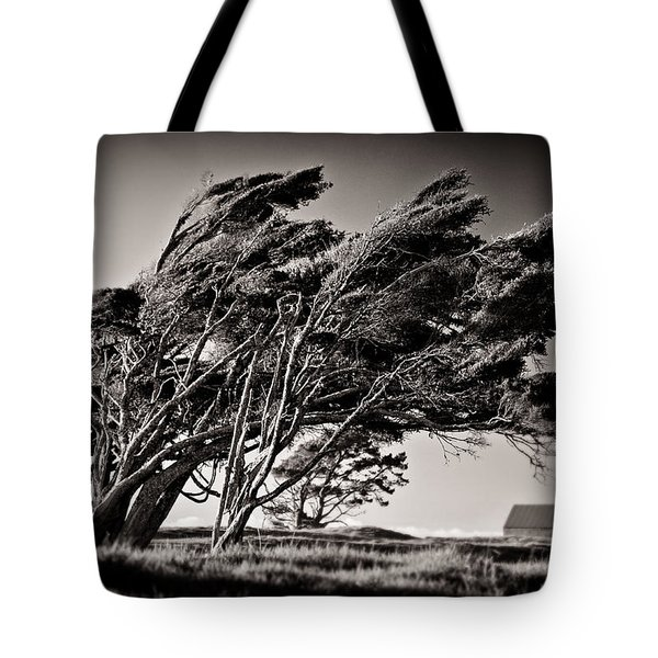 Windswept Tote Bag by Dave Bowman