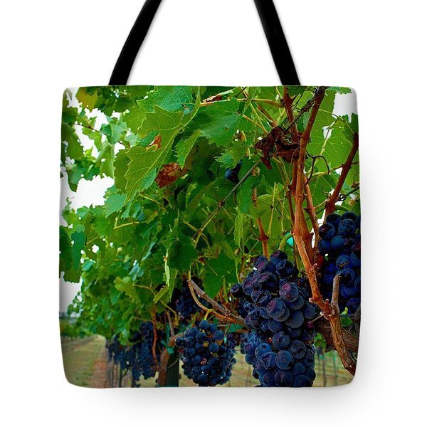 Wine Grapes on the Vine Tote Bag by Kristina Deane