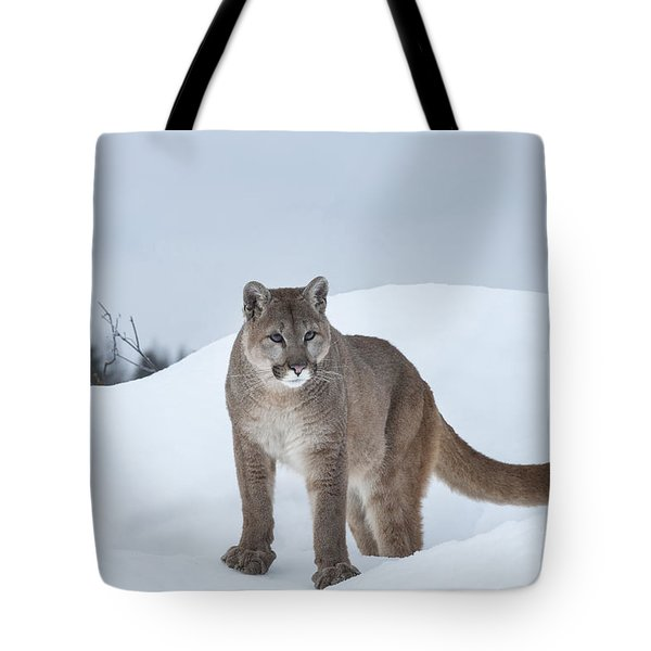 Winter Mountain Lion  Tote Bag by Sandra Bronstein