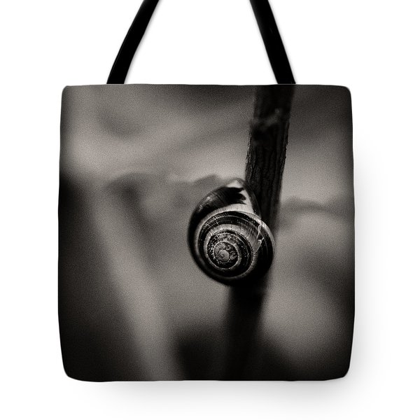 Woodland - Study 11 Tote Bag by Dave Bowman