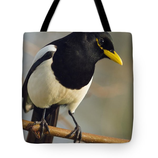 Yellow-billed Magpie Tote Bag by Doug Herr