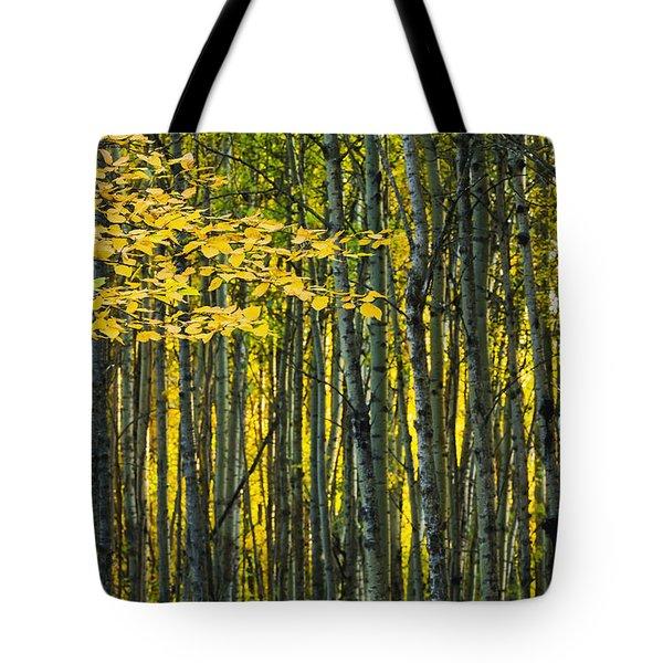 Yellow Fall Birch Leaves Against An Tote Bag by Joel Koop