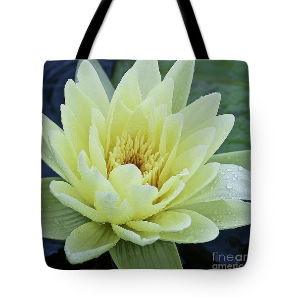 Yellow Water Lily Nymphaea Tote Bag by Heiko Koehrer-Wagner