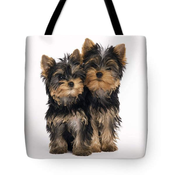 Yorkie Puppies Tote Bag by Jean-Michel Labat