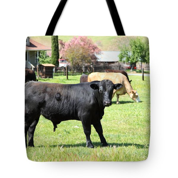 Young Bull Home On The Ranch At The Black Diamond Mines in Antioch California 5D22349 Tote Bag by Wingsdomain Art and Photography
