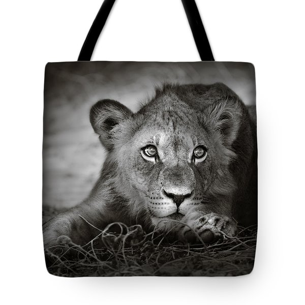 Young Lion Portrait Tote Bag by Johan Swanepoel
