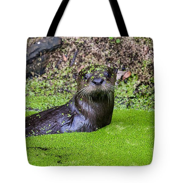 Young River Otter Egan's Creek Greenway Florida Tote Bag by Dawna  Moore Photography