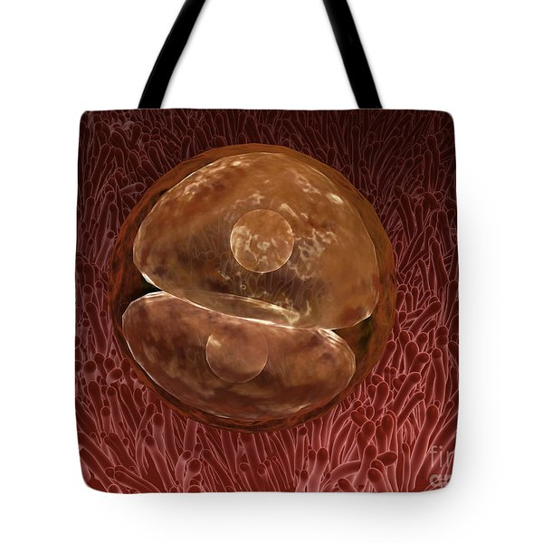 Zygote Development 24-36 Hours Tote Bag by Stocktrek Images