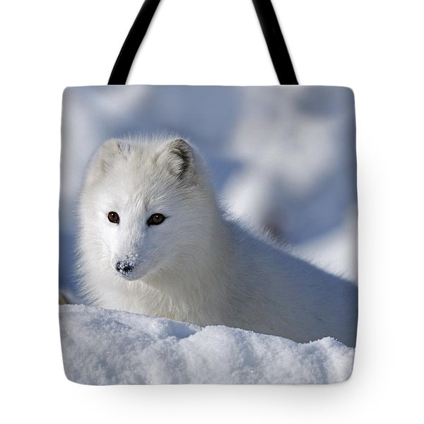 Arctic Fox Exploring Fresh Snow Alaska Tote Bag by David Ponton
