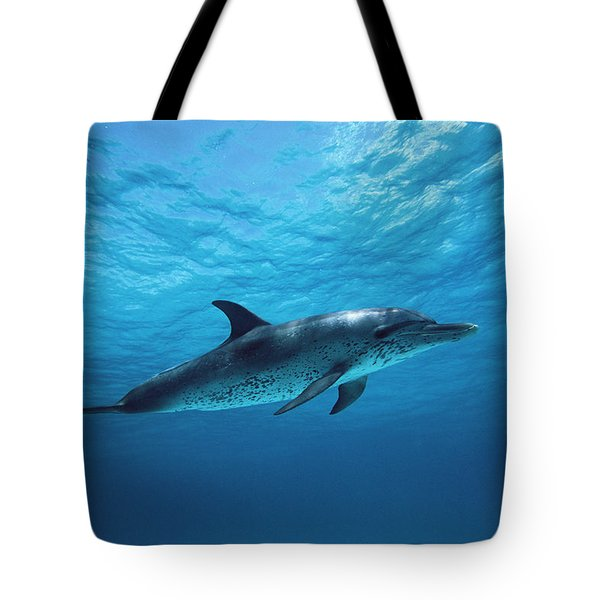 Atlantic Spotted Dolphin Stenella Tote Bag by Todd Pusser
