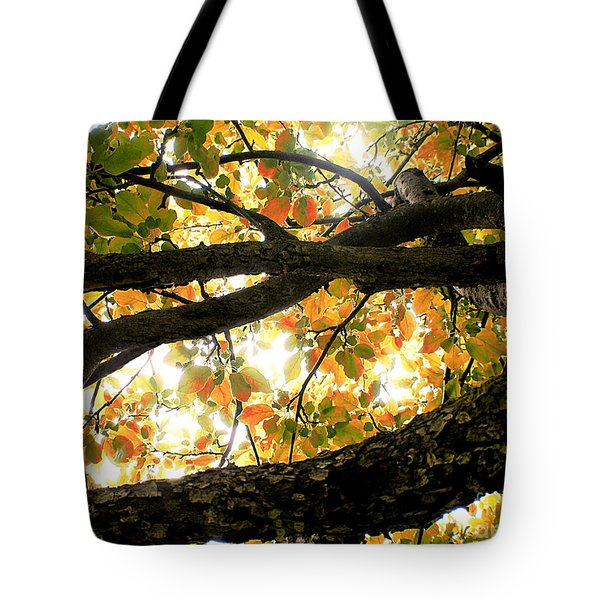 Beneath The Autumn Wolf River Apple Tree Tote Bag by Angie Rea