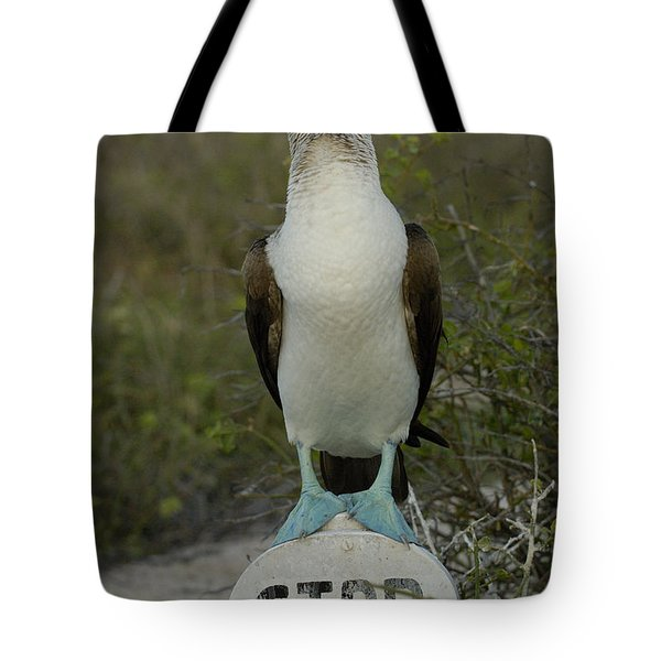 Blue-footed Booby Sula Nebouxii Tote Bag by Pete Oxford