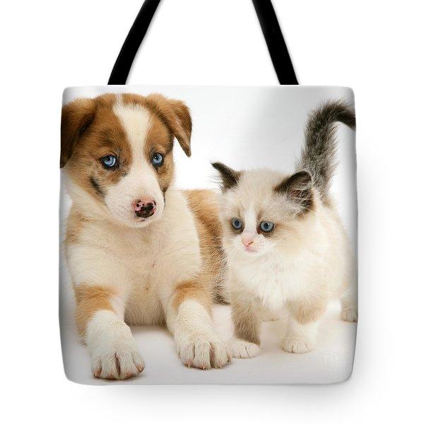 Border Collie And Birman-cross Kitten Tote Bag by Jane Burton