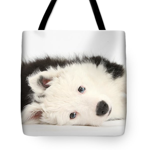 Border Collie Puppy Tote Bag by Mark Taylor