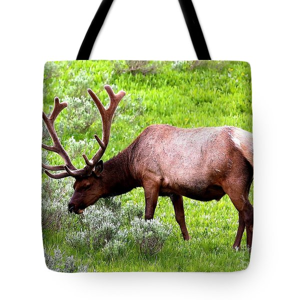 Bull Elk Tote Bag by Carol Groenen