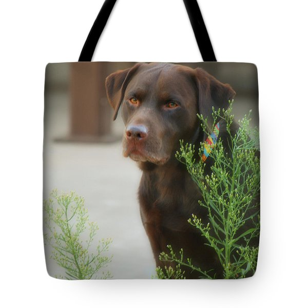 Chocolate Labrador - Womans Best Friend Tote Bag by Donna Greene
