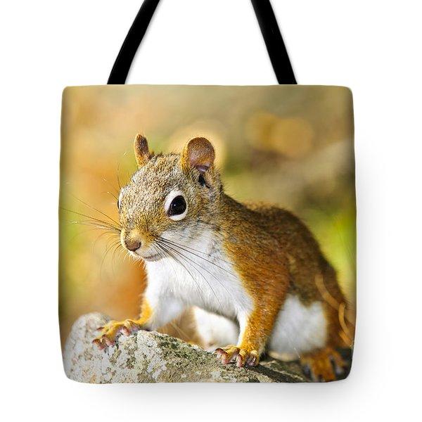 Cute Red Squirrel Closeup Tote Bag by Elena Elisseeva