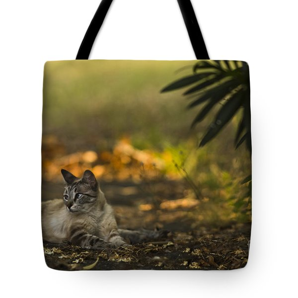 Evening Glow Tote Bag by Kim Henderson