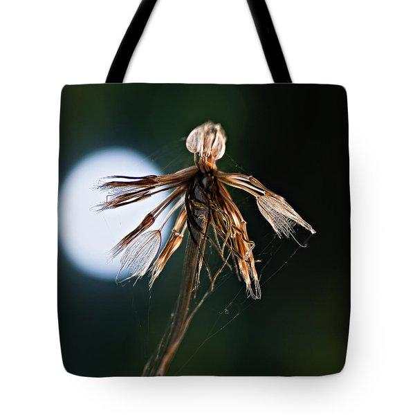 Finale Tote Bag by Steve Harrington