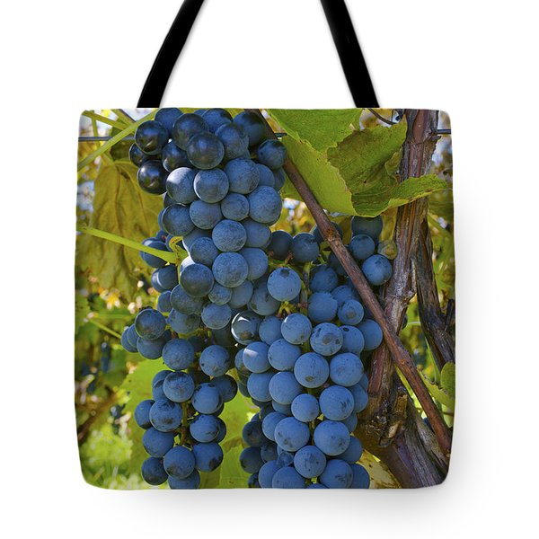 Grapes On A Vine Sutton Junction Quebec Tote Bag by David Chapman
