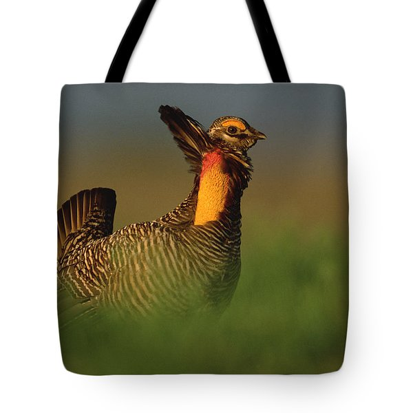 Greater Prairie Chicken Male Tote Bag by Tim Fitzharris
