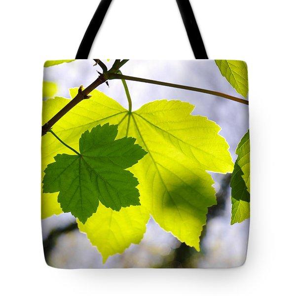 Green Leaves Tote Bag by Carlos Caetano