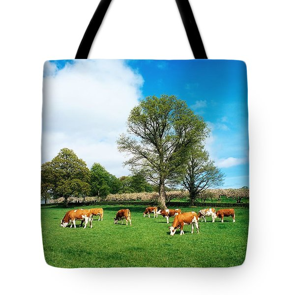 Hereford Bullocks Tote Bag by The Irish Image Collection