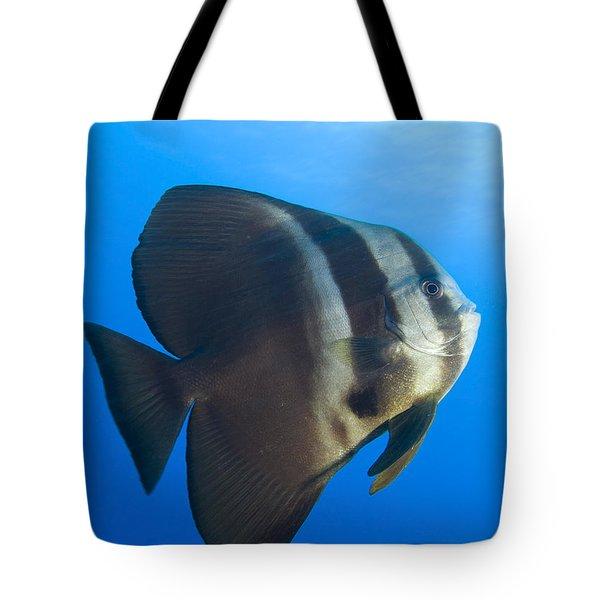 Longfin Spadefish, Papua New Guinea Tote Bag by Steve Jones