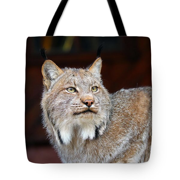 North American Lynx Tote Bag by Paul Fell