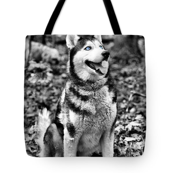 Ole Blue Eyes Tote Bag by JC Findley