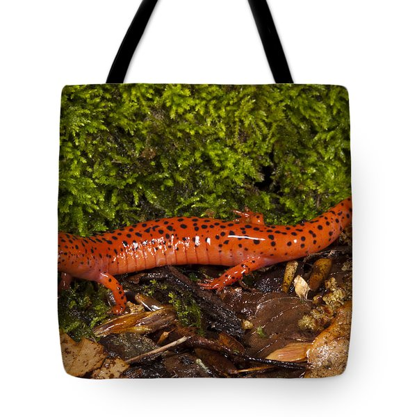 Red Salamander Pseudotriton Ruber Tote Bag by Pete Oxford
