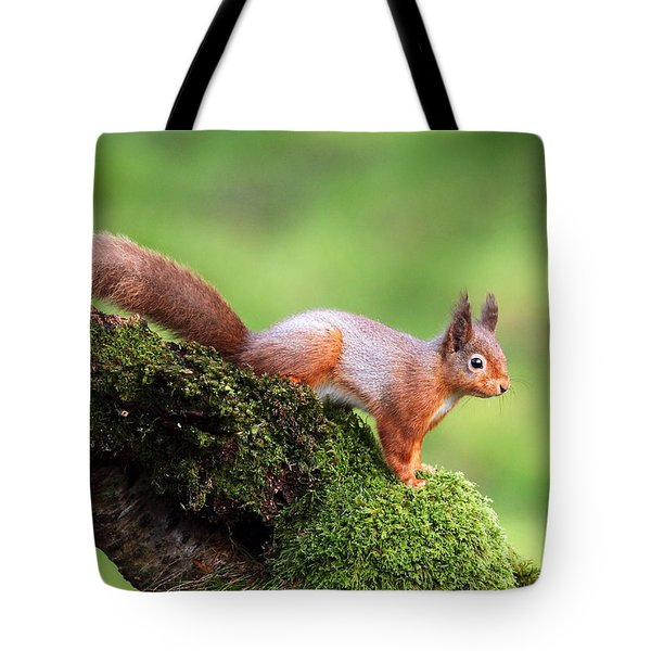 Red Squirrel Tote Bag by Grant Glendinning