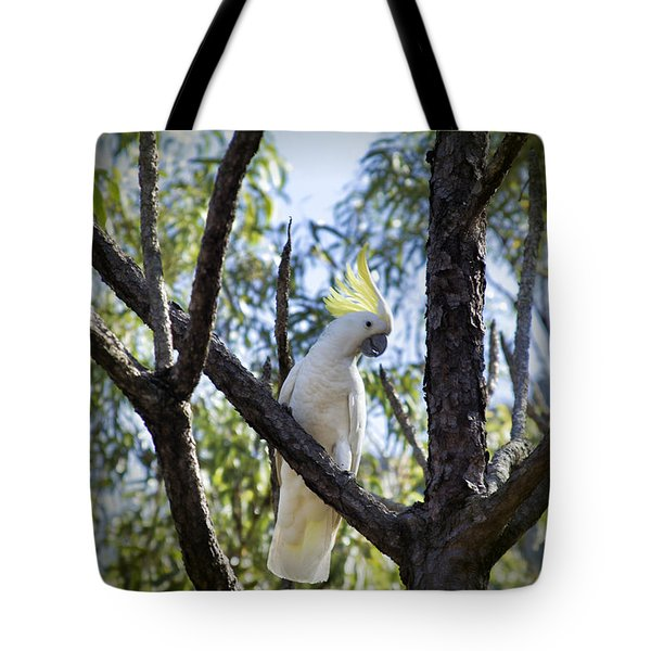 Sulphur Crested Cockatoo Tote Bag by Douglas Barnard