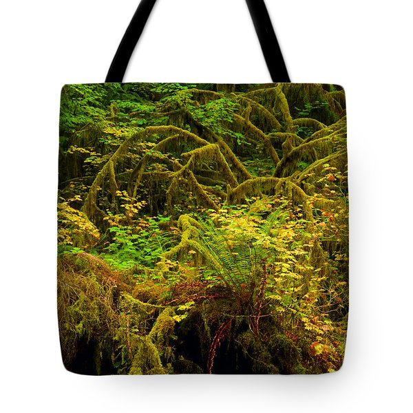 Temperate Rain Forest Tote Bag by Adam Jewell