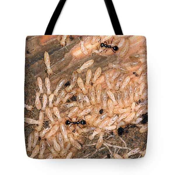 Termite Nest Reticulitermes Flavipes Tote Bag by Ted Kinsman