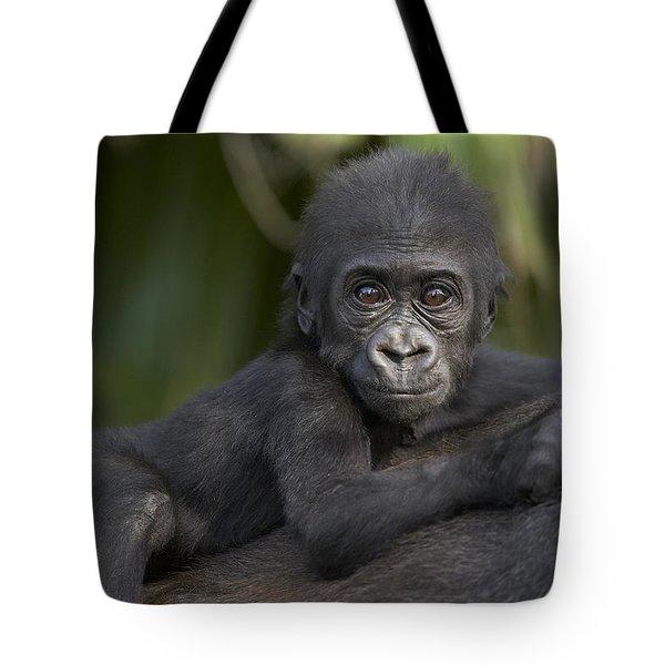 Western Lowland Gorilla Gorilla Gorilla Tote Bag by San Diego Zoo
