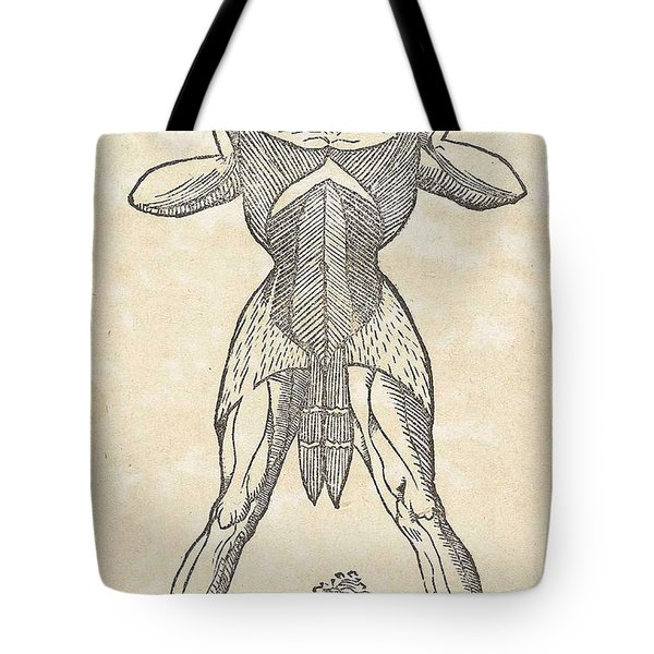 Historical Anatomical Illustration Tote Bag by Science Source