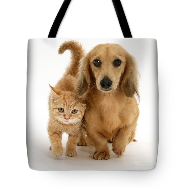 Kitten And Puppy Tote Bag by Jane Burton