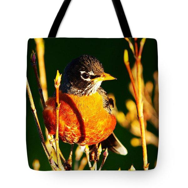American Robin Tote Bag by Paul Ge