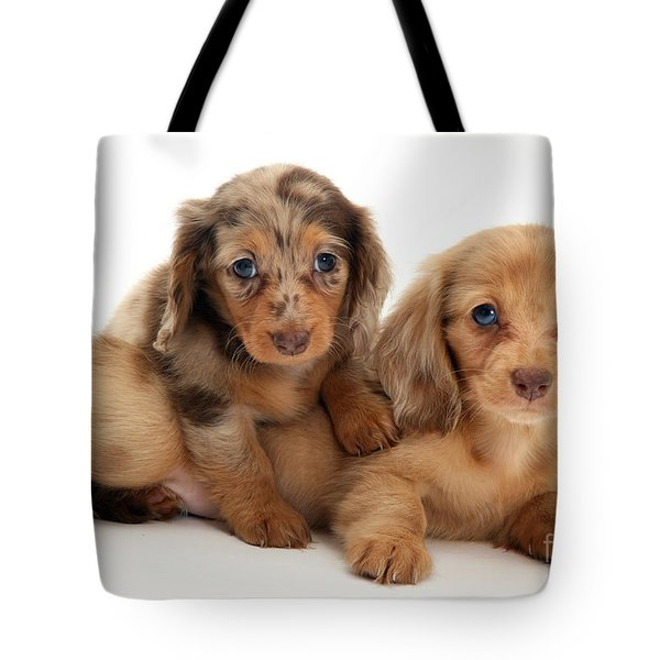 Dachshund Pups Tote Bag by Jane Burton
