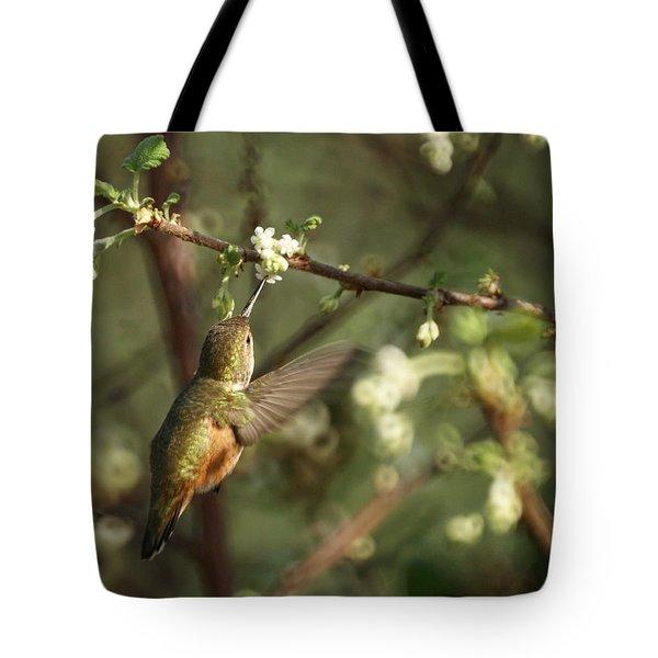 Hummingbird Tote Bag by Ernie Echols
