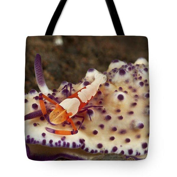 Nudibranch With Orange Emperor Shrimp Tote Bag by Mathieu Meur