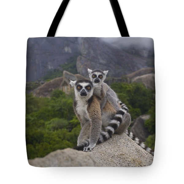 Ring-tailed Lemur Lemur Catta Mother Tote Bag by Pete Oxford