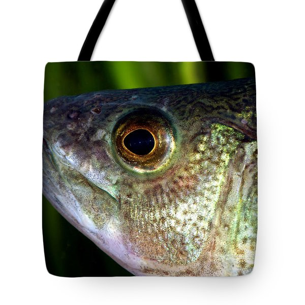 Yellow Perch Perca Flavescens Tote Bag by Ted Kinsman