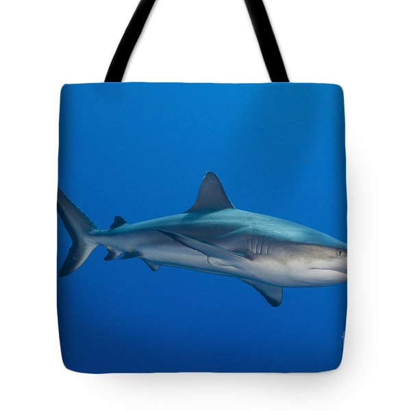Gray Reef Shark, Kimbe Bay, Papua New Tote Bag by Steve Jones