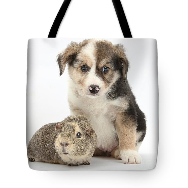 Border Collie Pup And Guinea Pig Tote Bag by Mark Taylor