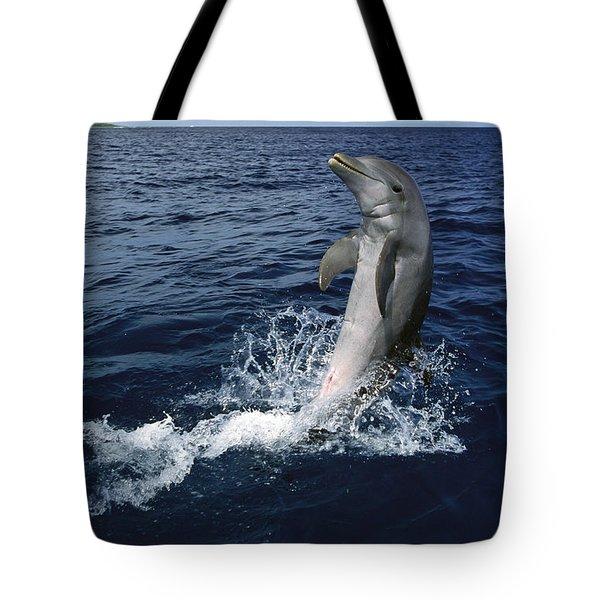 Bottlenose Dolphin Tursiops Truncatus Tote Bag by Konrad Wothe