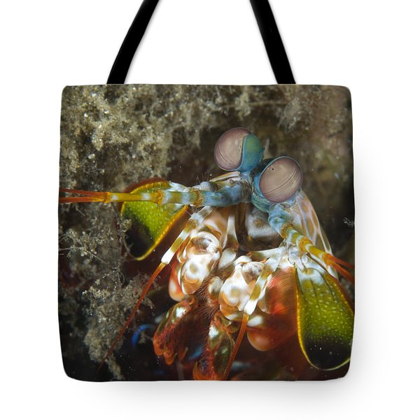 Close-up View Of A Mantis Shrimp, Papua Tote Bag by Steve Jones